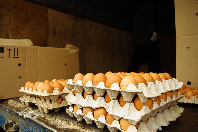 Как правильно хранить куриные яйца © Техномод